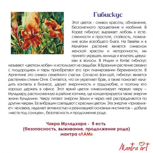 Гибискус